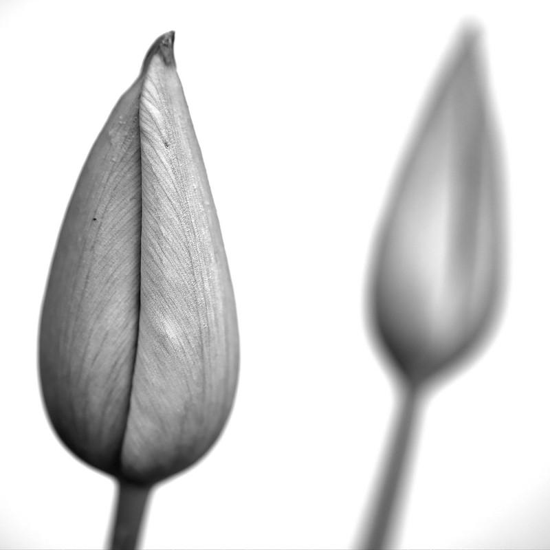 Ca fleurit! 39715745980_f1d7e699f1_c