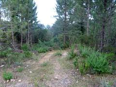 Sur la piste de la Figa Bona à l'embranchement de la 1ère piste annexe (ancien chemin de Paliri ?)