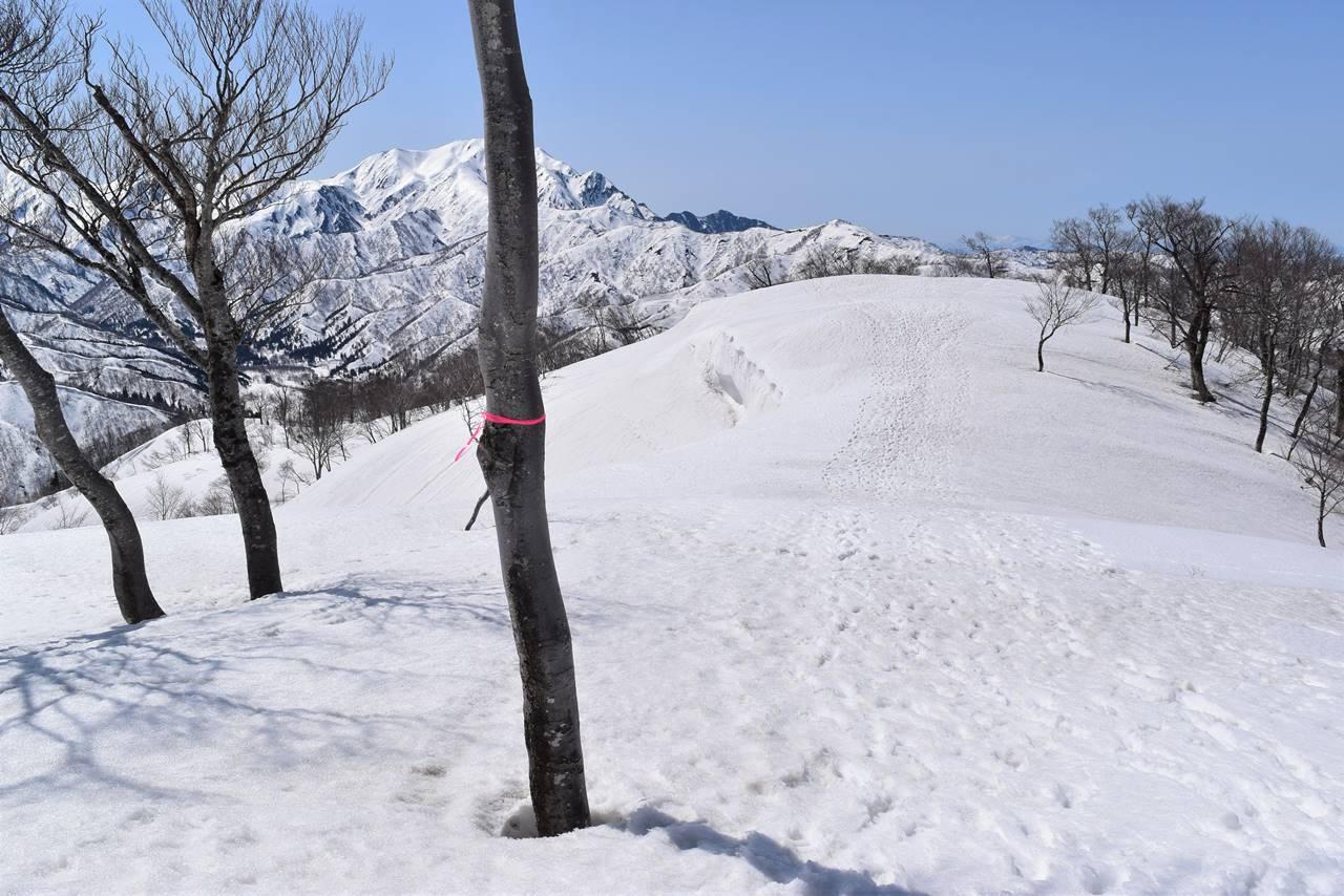 日向倉山 登山道のピンクテープ