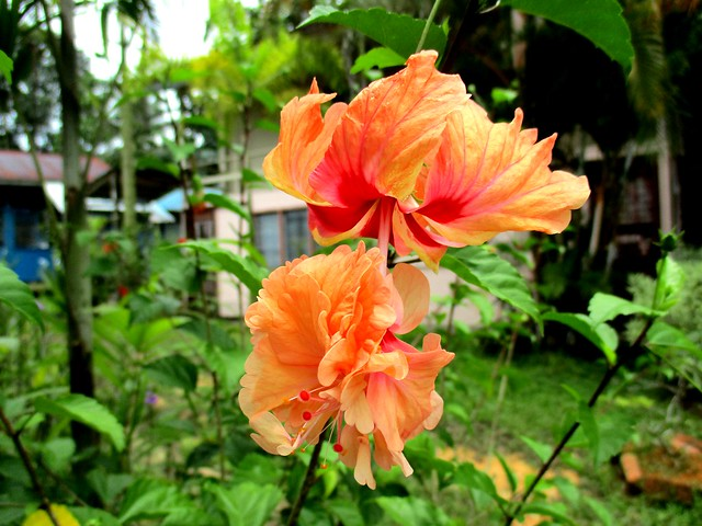 Flower within a flower, orange