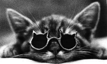 cat_sunglasses | by absurdness.com