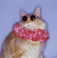 cat sunglasses bxp134168 | by absurdness.com