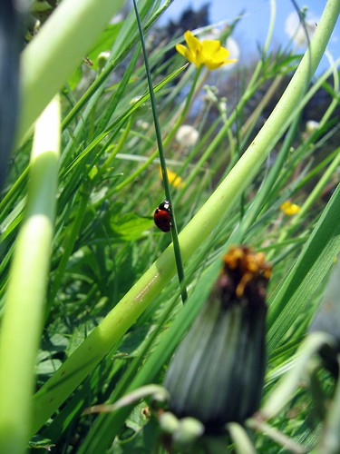 Ladybird in the jungle 1 | by cesare g