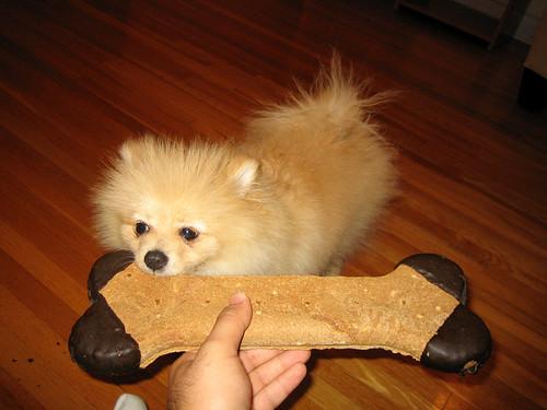Frezer Dog Treat Toy