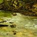 Green Stream #2