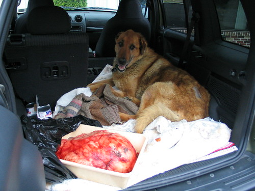 Tumor On Dog S Back