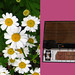 Stylophone Daisies 70s montage