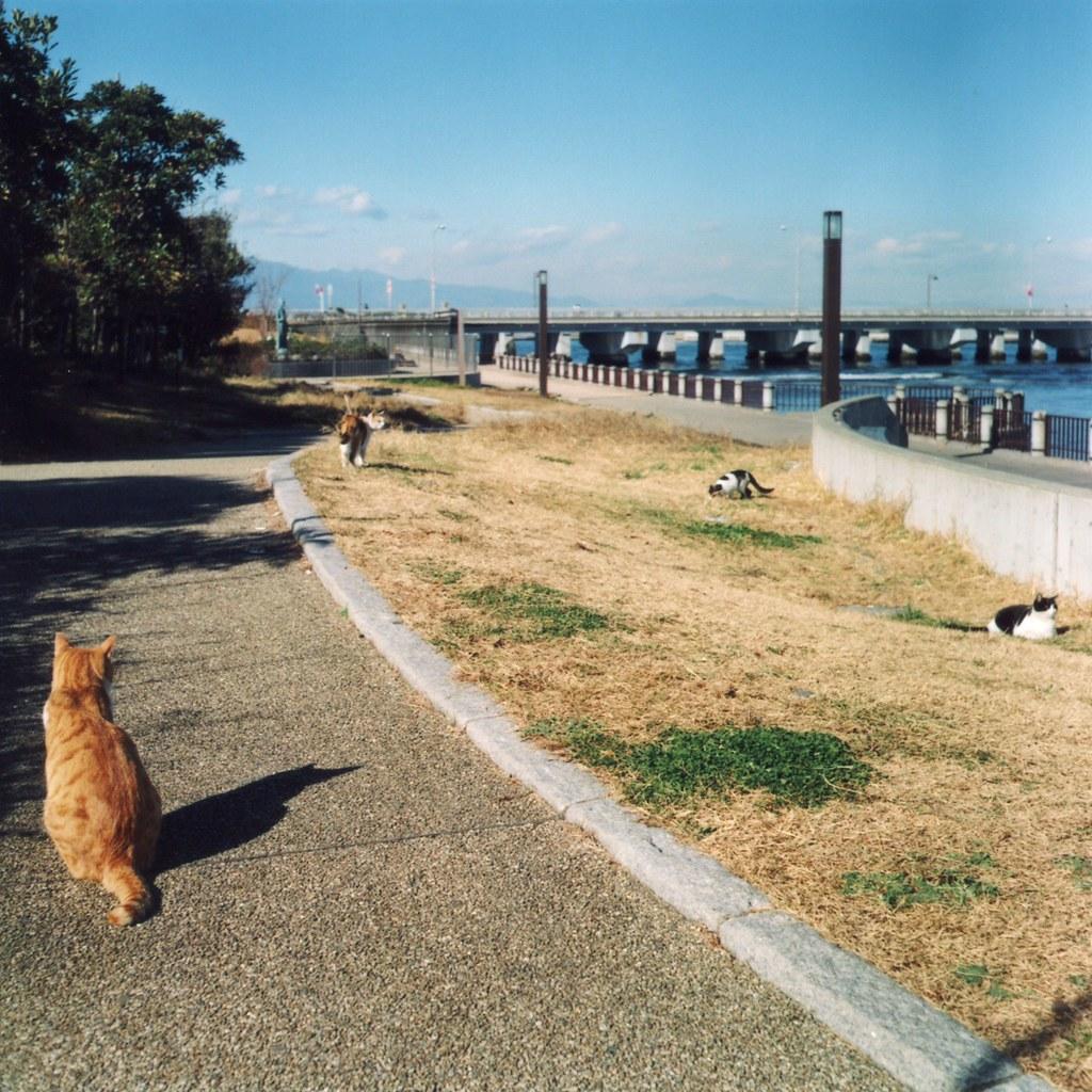 Gatos enoshima