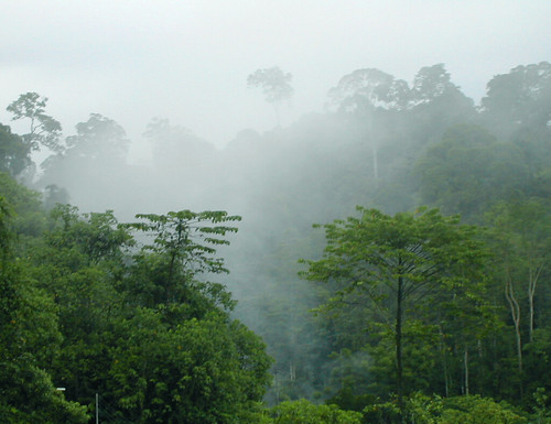 cloud forest, Sandakan | by angela7dreams