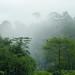 cloud forest, Sandakan