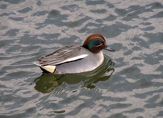 P110 common teal | by kaycatt*