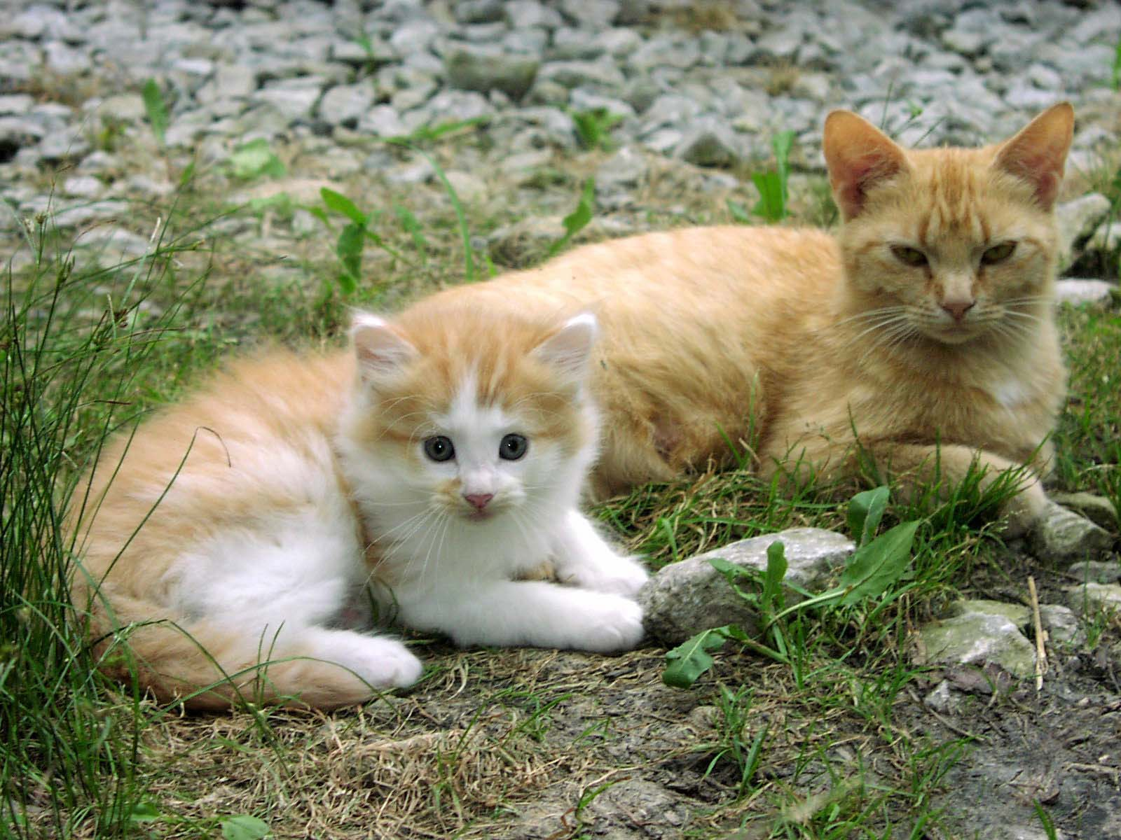 the story of my cats by liv boered cats kitten wild stray