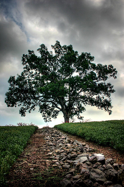 an analysis of the topic of the movie shawshank redemption by frank darabont The shawshank redemption questions including is the movie the shawshank  rebuild topic tree  the agent and close friend of frank darabont, the movie's director.