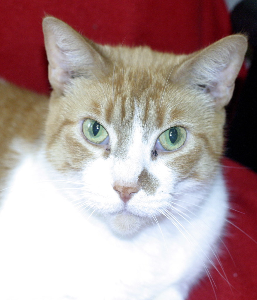 Cats For Adoption In Lake Charles