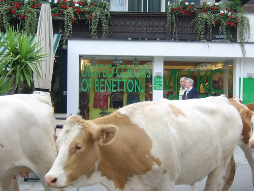 United Cow-lors of Benetton | by Carrignafoy