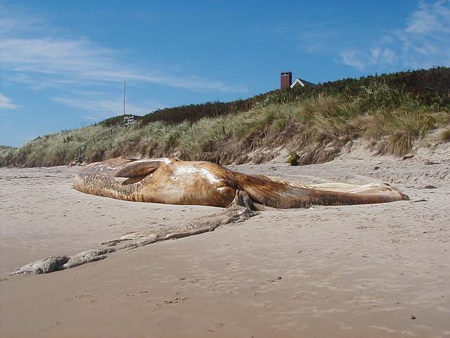Block World Free >> Beached Whale, Crescent Beach, Block Island, September, 20 ...