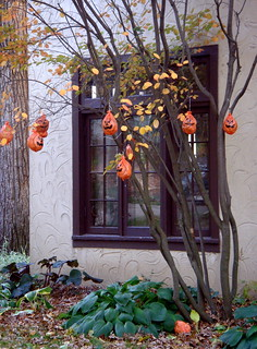 Halloween tree | by Ann Althouse