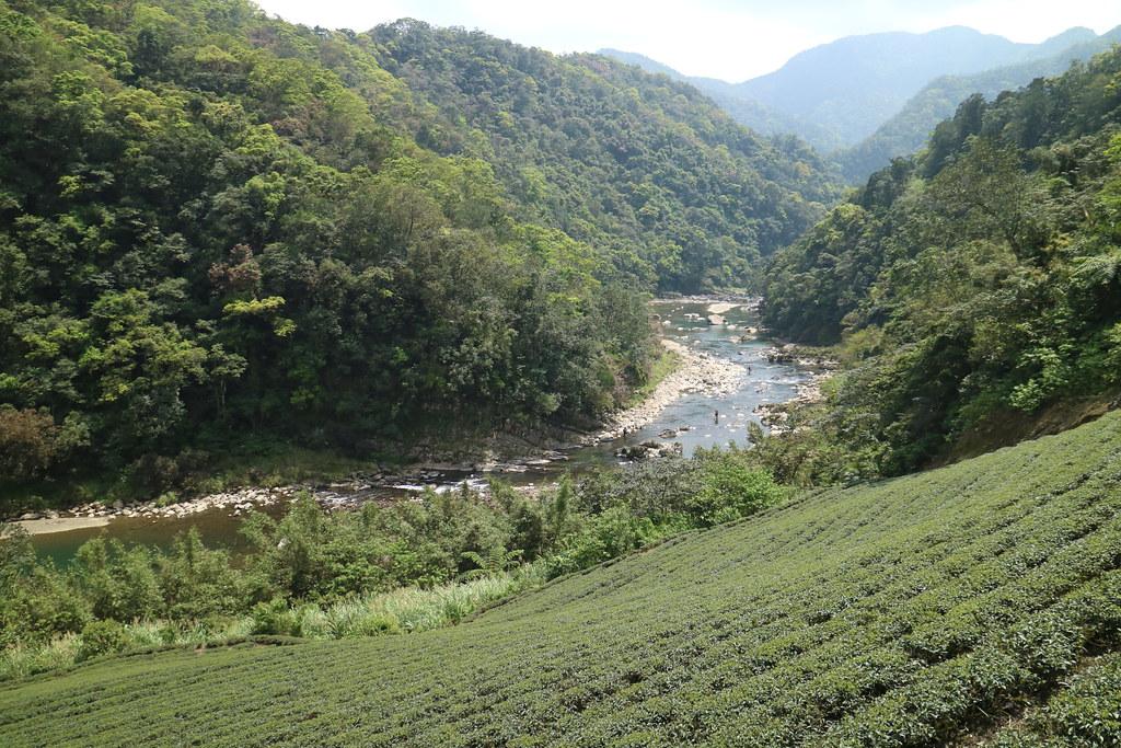 沿丘陵坡度而闢建的茶園,是北勢溪的集水區。