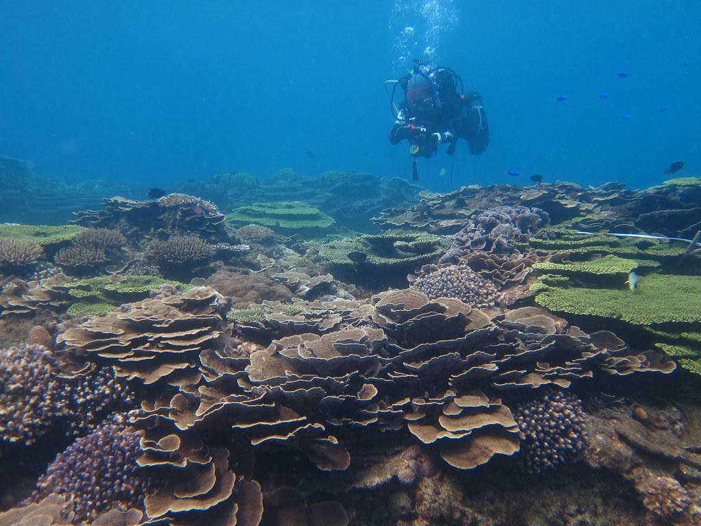 東嶼坪西側的珊瑚(林育朱攝)