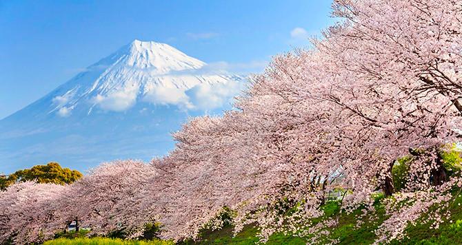 TOKYO – HAKONE – FUJI   (Ăn trên máy bay/ trưa/ tối)