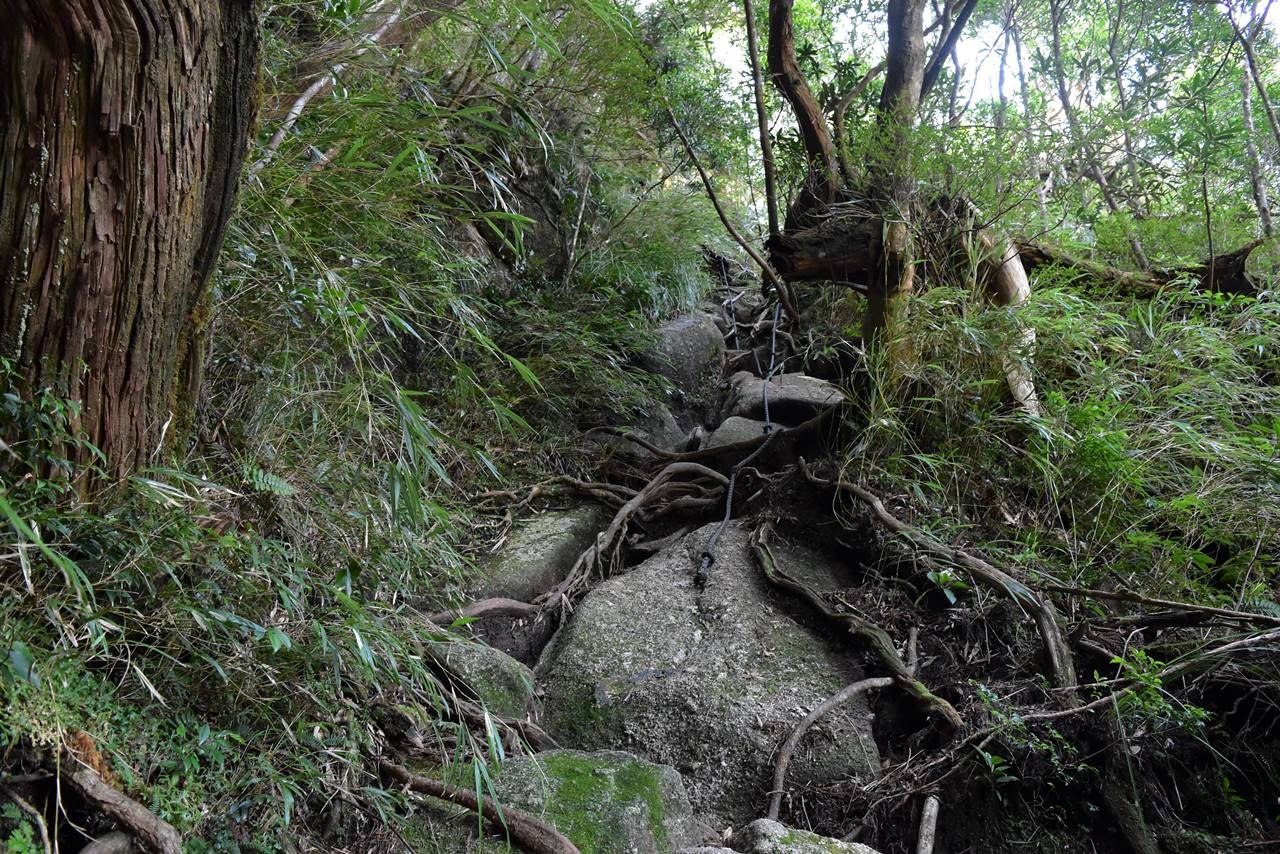 モッチョム岳の急登