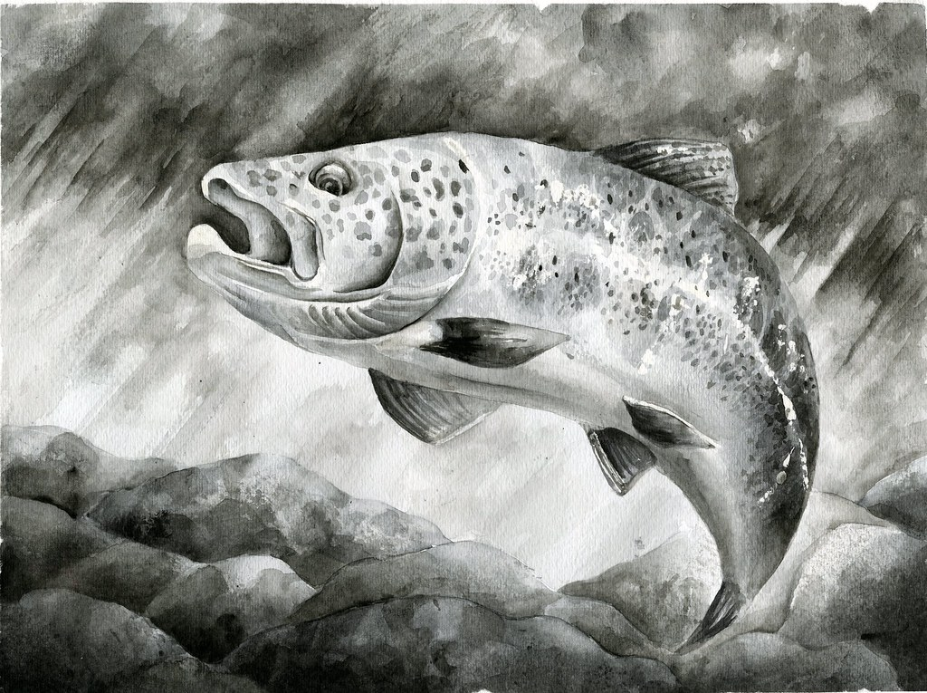 2018 state fish art contest flickr for Texas parks and wildlife fishing report