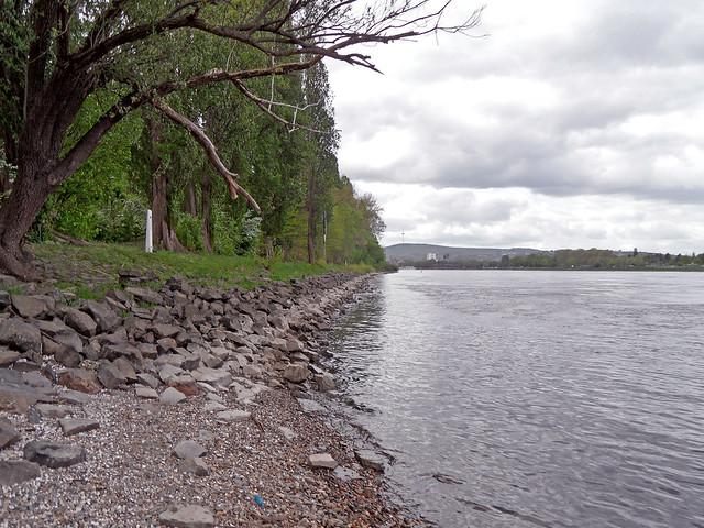 Befestigtes und begrüntes Rheinufer