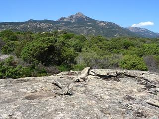 Sur le sentier vers Pastricciola, une belle dalle avec vue sur la Cagna