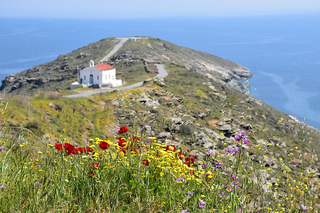 Church and wild flowers, Ormos Korthiu route, Andros