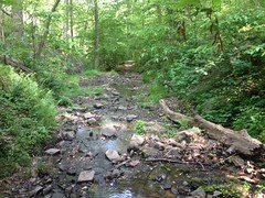 Some Creek