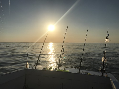 Fishing Rods at sunset