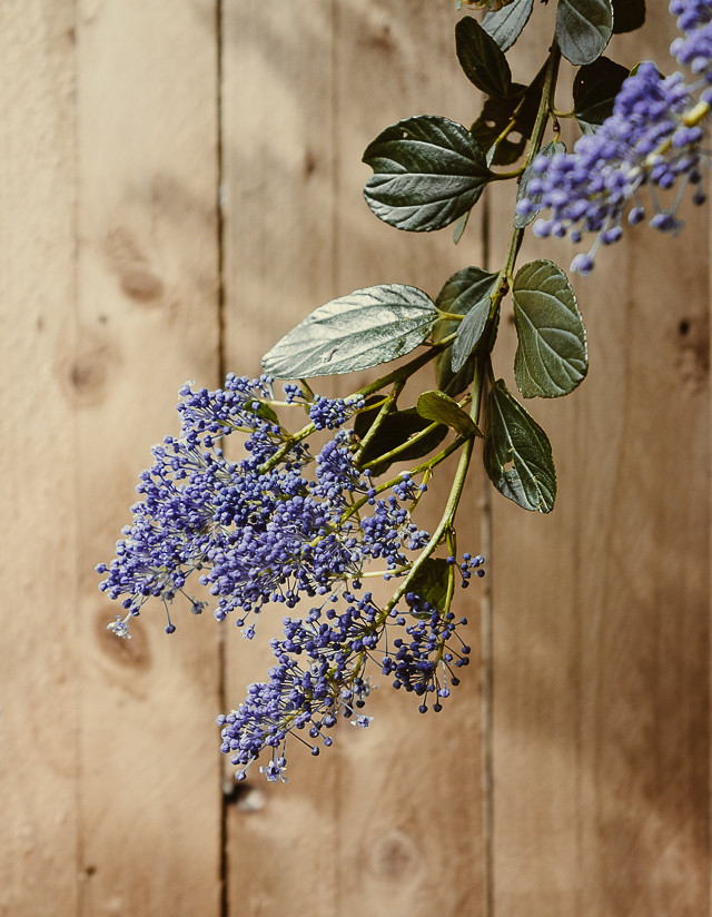 purple plant on wood