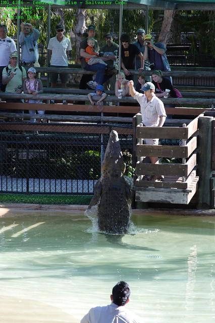 Img 4386 Feeding Charlie Saltwater Croc Australia Zo Flickr