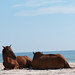 200608 - Assateague - ponies - 209683976_60700707f8_o