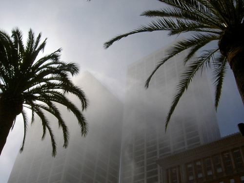 Foggy downtown with palm trees | by 2composers