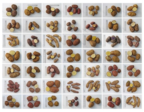 Potato varieties, take 2 | by benmillett