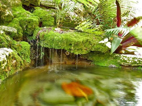 Awesome Pincrest Gardens #1: 264326576_172c540b1c.jpg