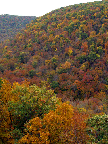Hawksbill Crag (or Whitaker Point) In