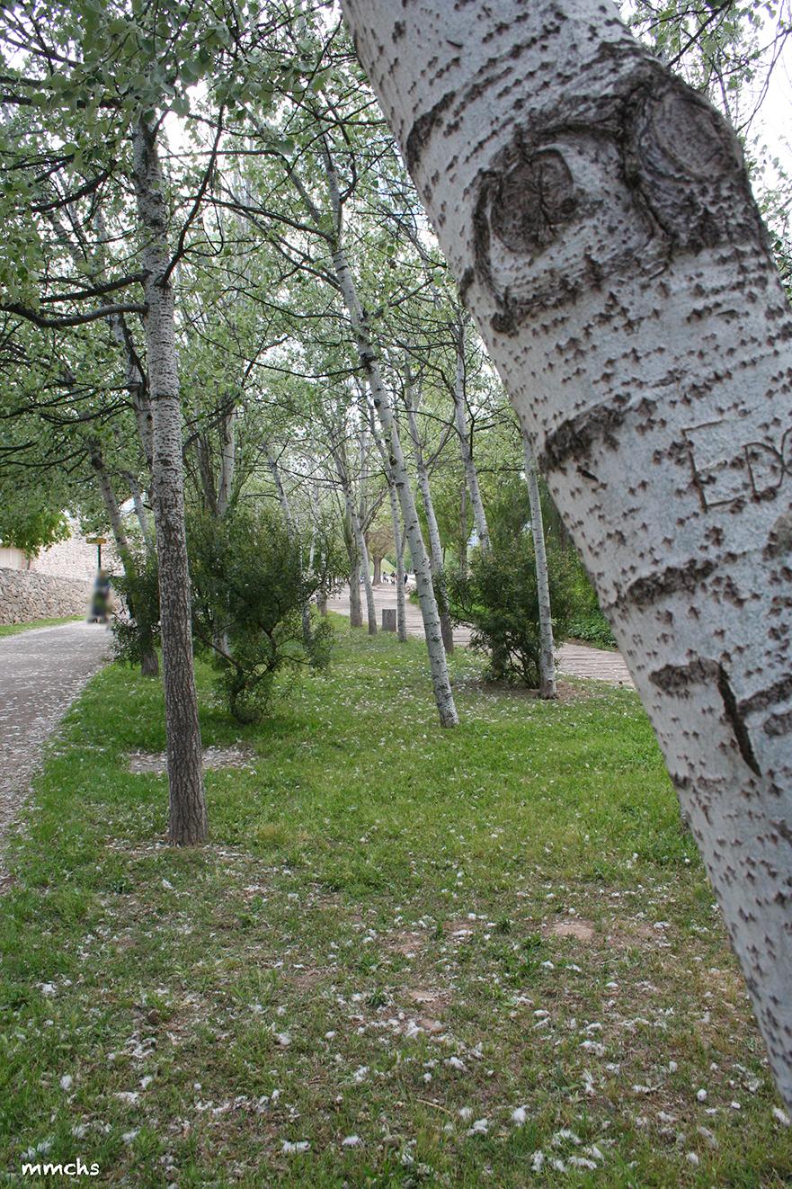 arbol de parque