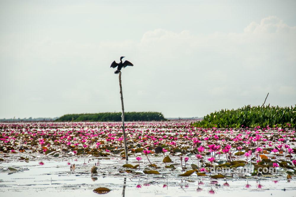 Тхале-Ной Пхаттхалунг
