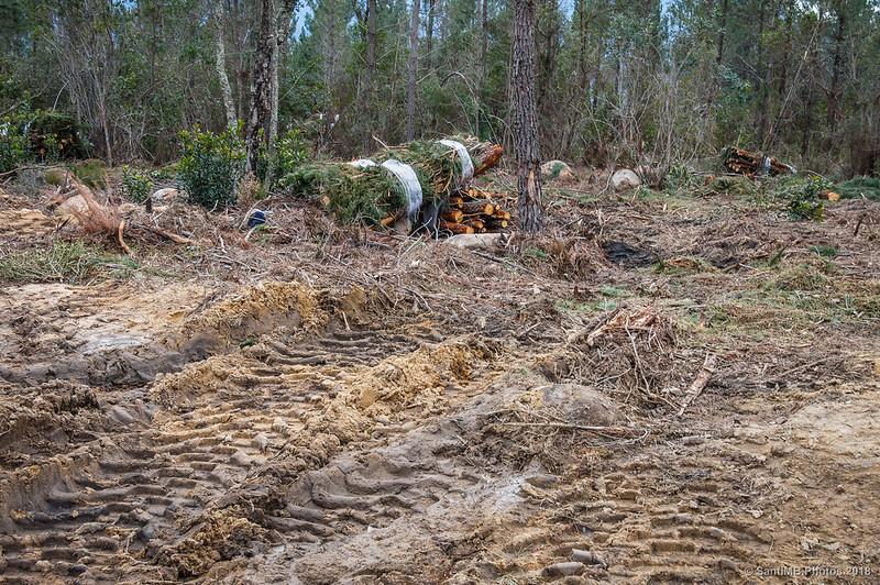 Limpieza en el Bosc de les Agudes