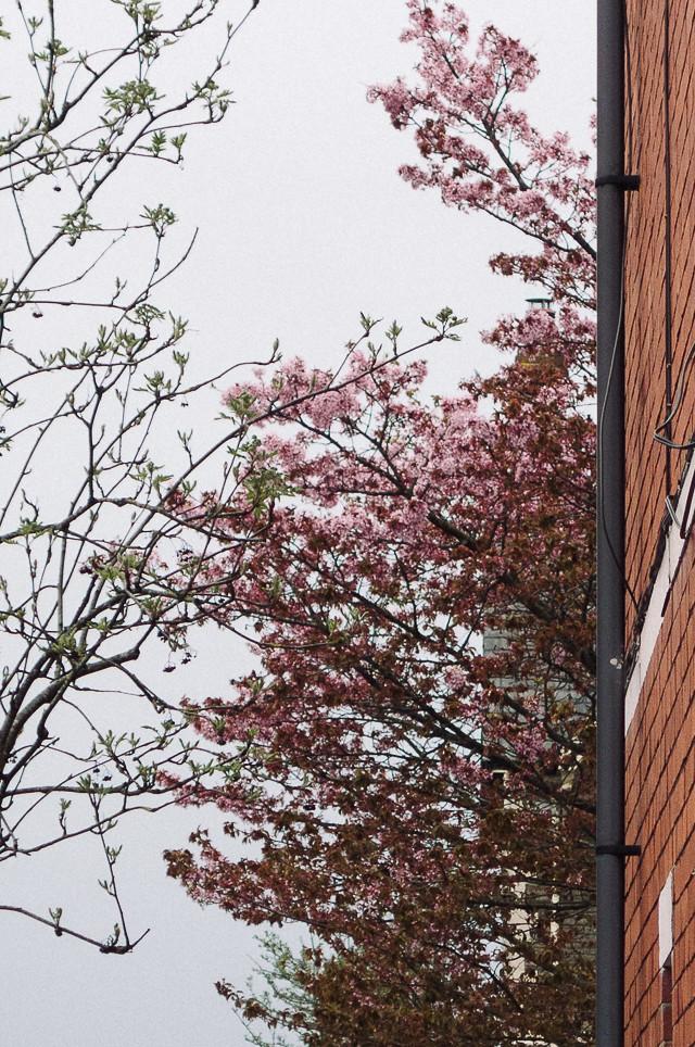 blossom tree poking around house