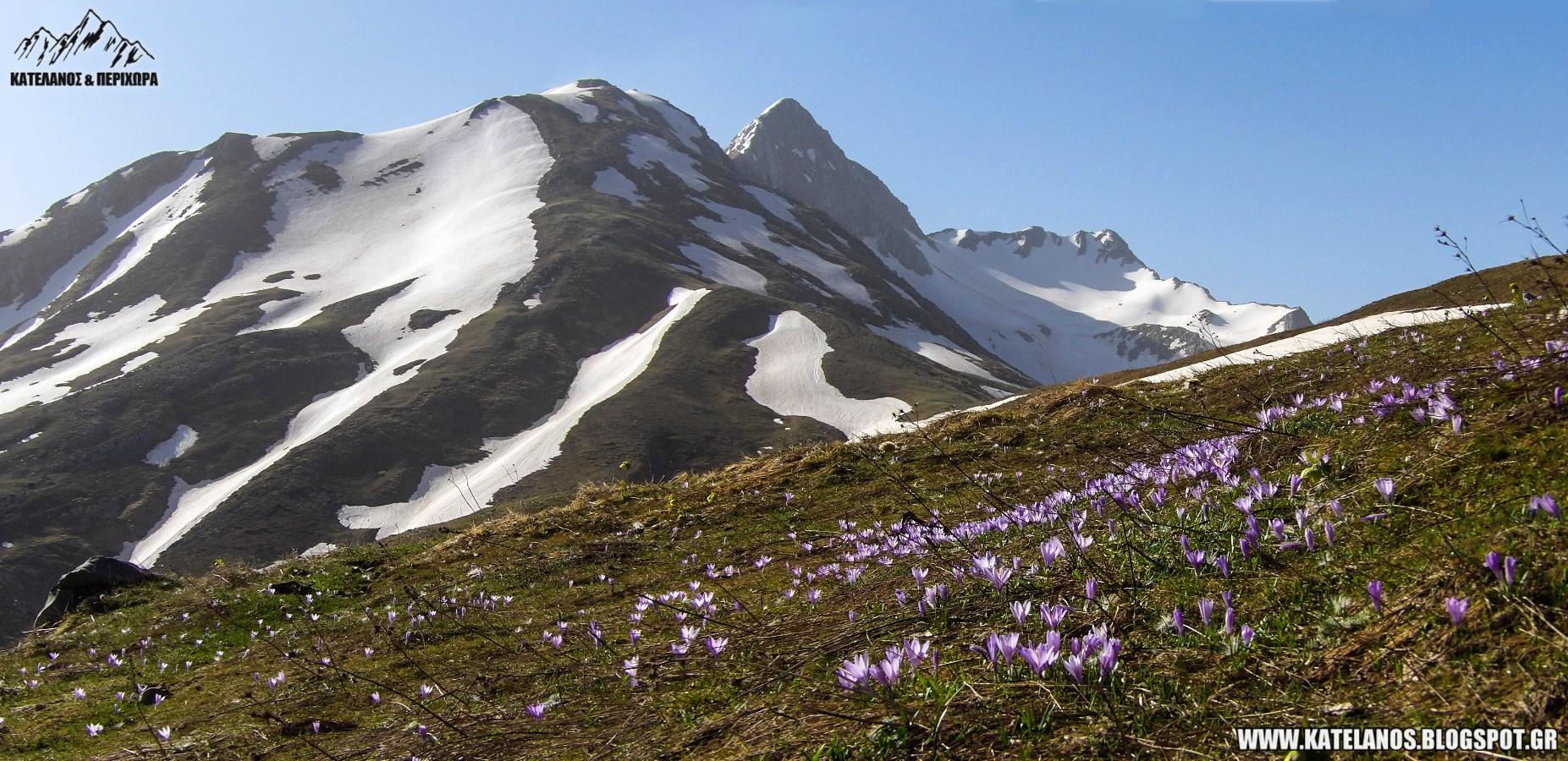 ανοιξη στο βουνο ελληνικα βουνα χατζη μεσοχωρα τρικαλα