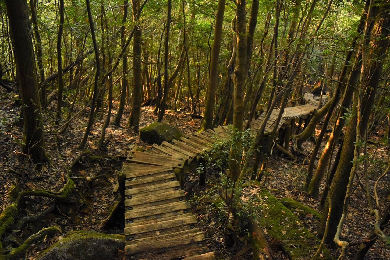 縄文杉までの木道の階段