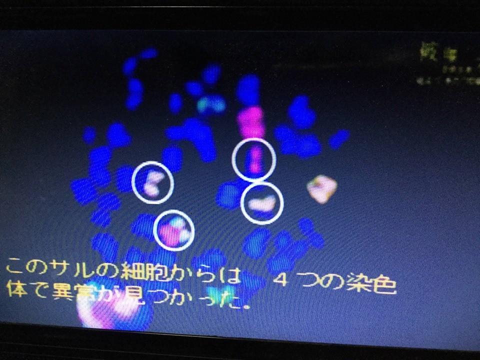 圖六:從日本獼猴的血液裡,發現染色體異常的現象。