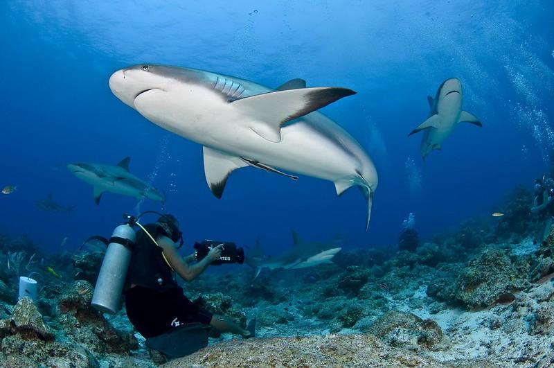 Ofertas de Viajes de buceo Maldivas