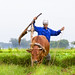 Man using a cow to plow his rice paddy