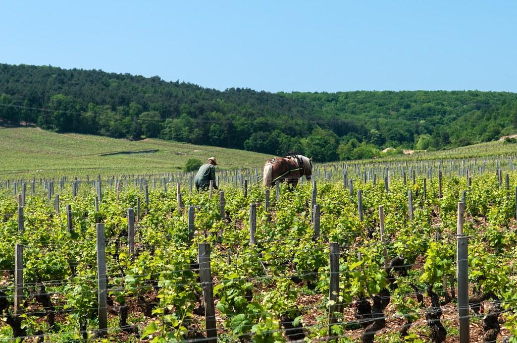 始於葡萄酒的法國產地認證,而後也擴及其它農產品。2016年法國共有456種農產品獲得AOP標章,認證內容除產地,也包含製造、加工方式與原料來源。圖為法國著名葡萄酒產地勃根地(Burgundy)葡萄園。(圖片來源:public domain by CC 2.0)