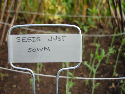 9.9.06: Seeds just sown. | by rollerboogie