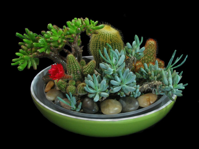 Garden Design Garden Design with Indoor Cactus Garden on